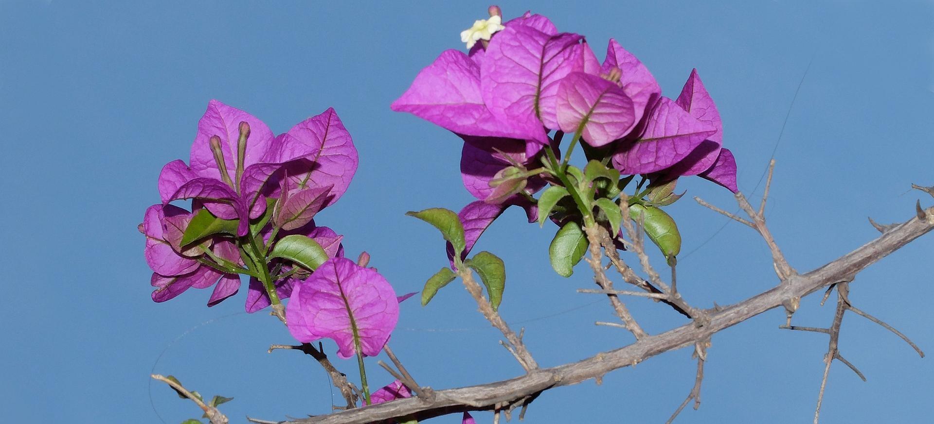 Hasta el las peores sequías hay oportunidad para florecer